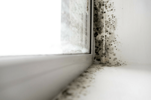 Mold and mildew In Restroom