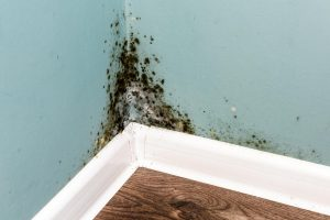 Black Mold And Mildew In Cellar